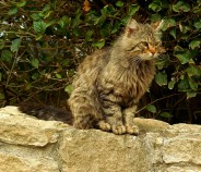 Una dintre cele mai aratoase pisici vazute de mine vreodata.