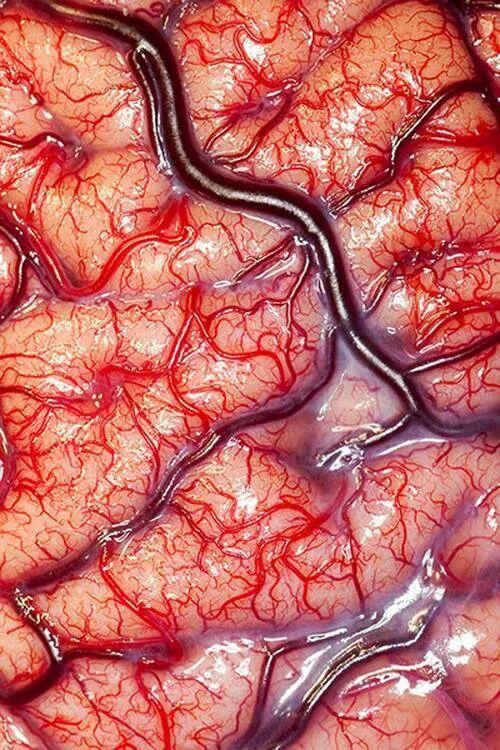 suprafata creierului uman