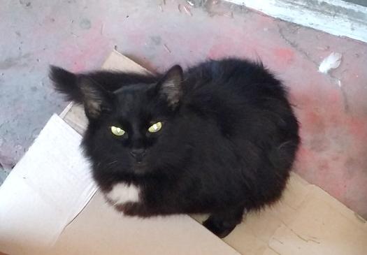 pisica de la morga