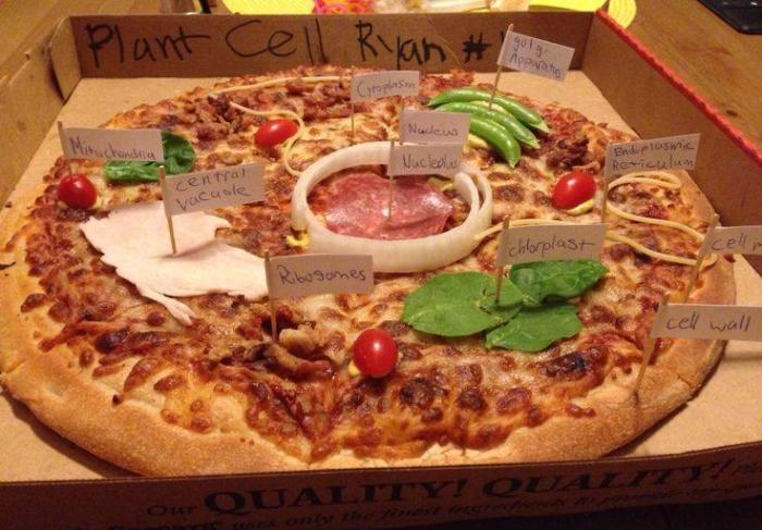 pizza celula