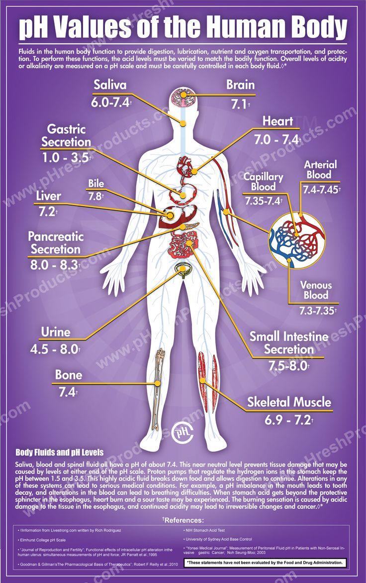 pH in corpul uman