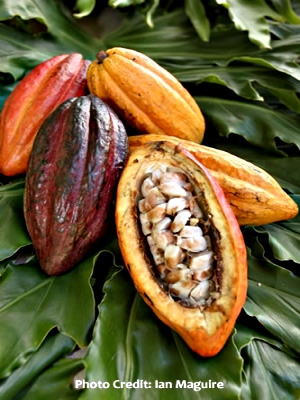 fruct cacao