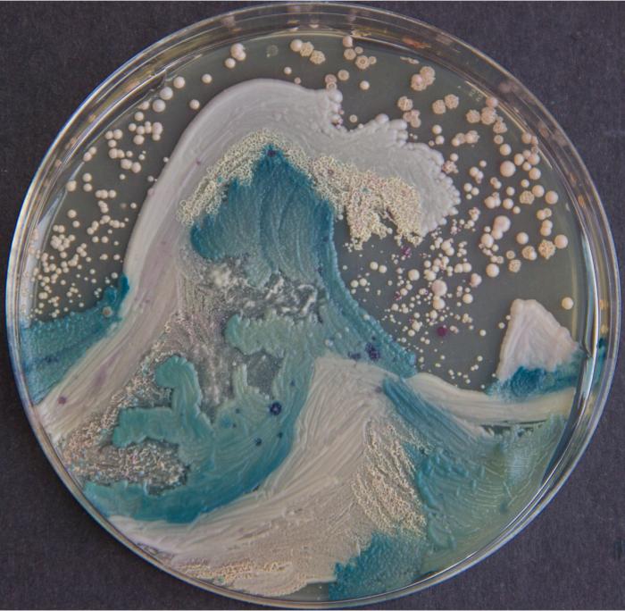 Candida albicans + C. glabrata + C. parapsilosis