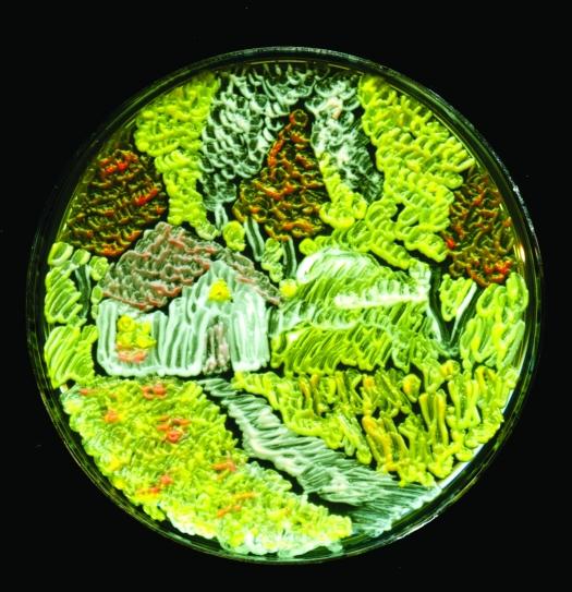 Saccharomyces cerevisiae - fara ea n-am avea drojdia