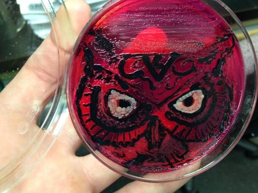 Salmonella + E. coli