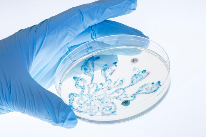 Escherichia coli + Citrobacter koseri + Klebsiella pneumoniae