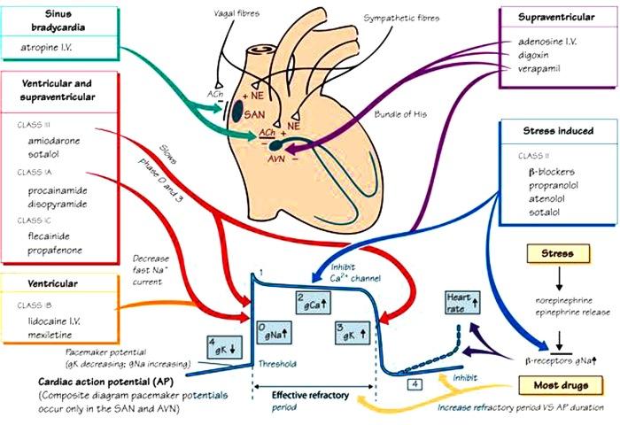 medicamente cardiace 2